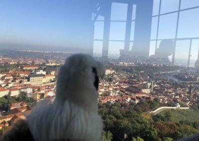 petrin bird2